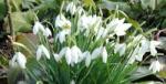 Foto impressie voorjaar